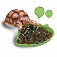 Bassin d'alimentation de reptiles amphibiens de conception de
